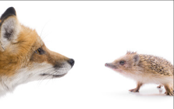 Fox & hedgehog